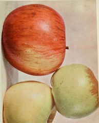 """Image from page 210 of """"Luther Burbank: his methods and discoveries and their practical application. Prepared from his original field notes covering more than 100,000 experiments made during forty years devoted to plant improvement, with the assistance of"""