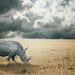 The rhino under the rain by **luisa**