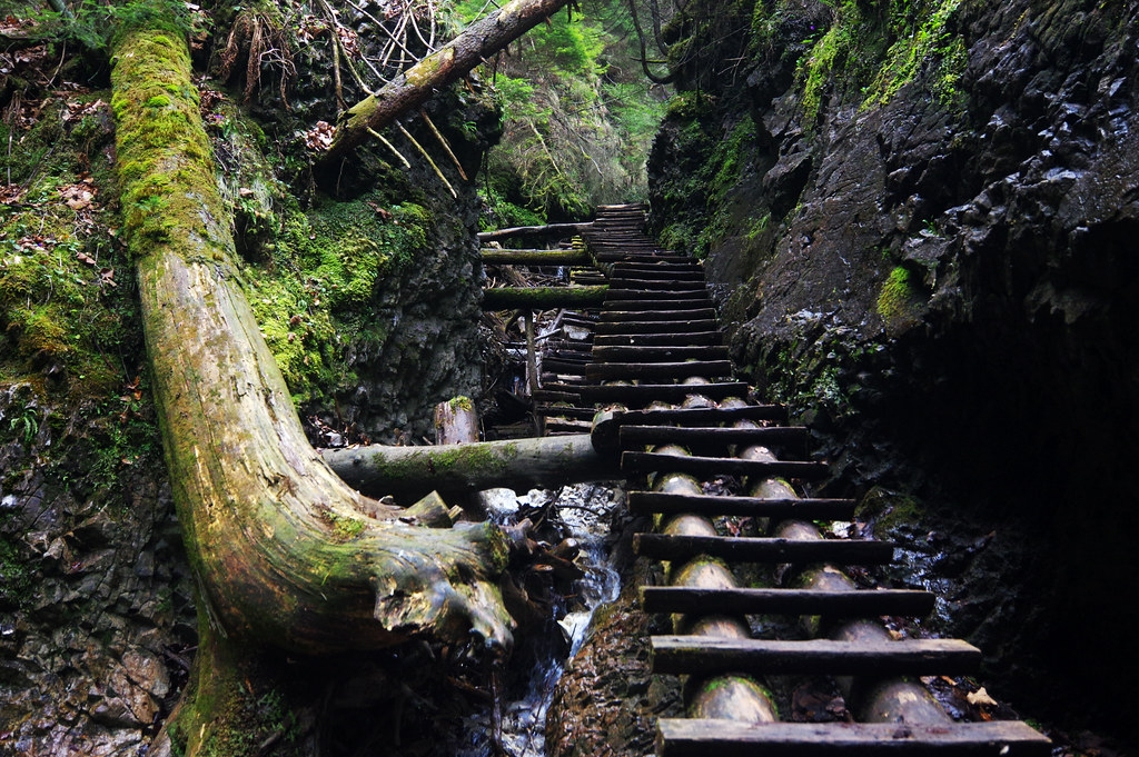 Wooden ladders in Suchá Belá gorge