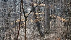 Bronx Forest N.Y.B.G.