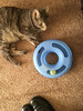 Check the cutest kittens: http://thecaturday.us