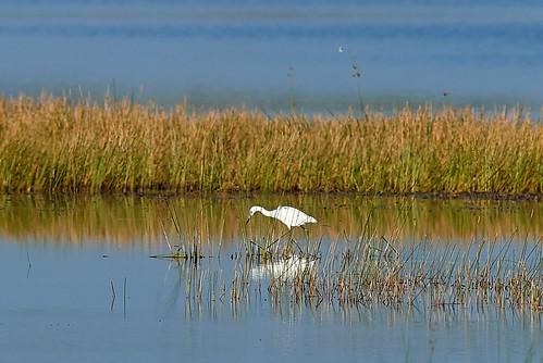 animal animals bird birds birdwatcher everglades southflorida feathers florida nature outdoor outdoors waterbirds wetlands wildlife wings canoneos1dxmarkii canonef500mmf4lisiiusm