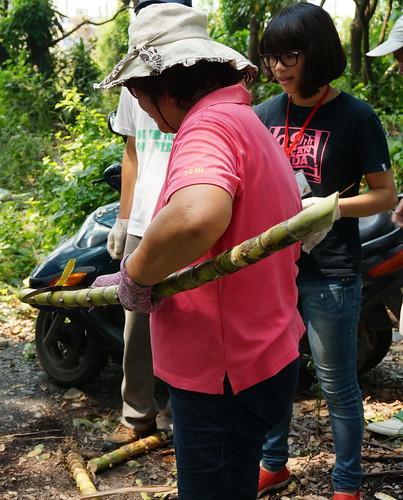 社區媽媽示範削甘蔗的方式