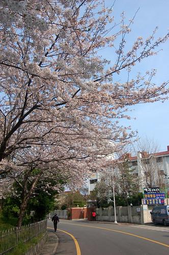 釜山 南川洞