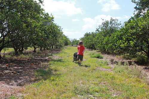 IMGU-Pick Citrus, Corkscrew Road, Collier County, South Florida8664