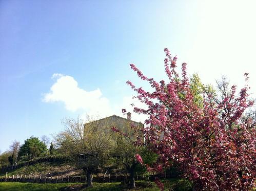 Primavera a Ca' Montanaro