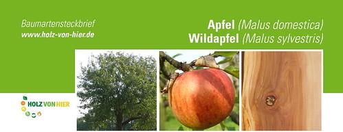 Apfel-Header
