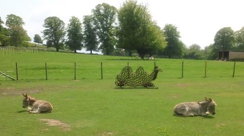 Camel! - guarded by donkeys!