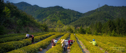 mountain history digital sony country farming culture documentary sunny social korea korean production fullframe alpha greentea southkorea filming chai generationgap boseong 보성 jeollanamdo a99 dslt 전라남도 세대차이 boseonggun sedaechai sonya99 sedae