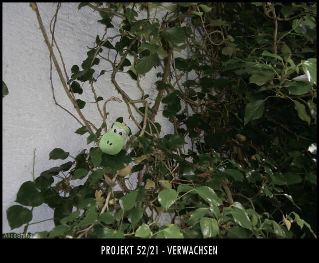 Projekt 52/21 - Verwachsen