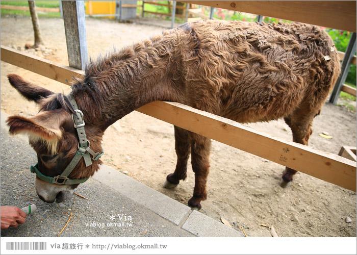 【彰化景點】克林姆莊園Cream Manor~小型動物園!戶外親子同遊好去處24