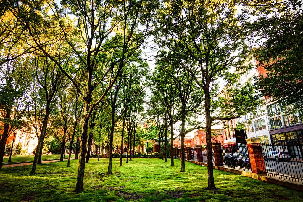 The Shady Grove......