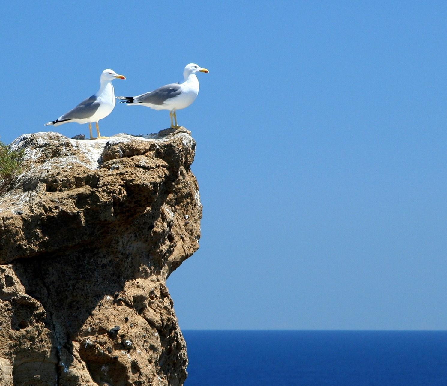 Las vigilantes del archipiélago. Autor, la Vieta