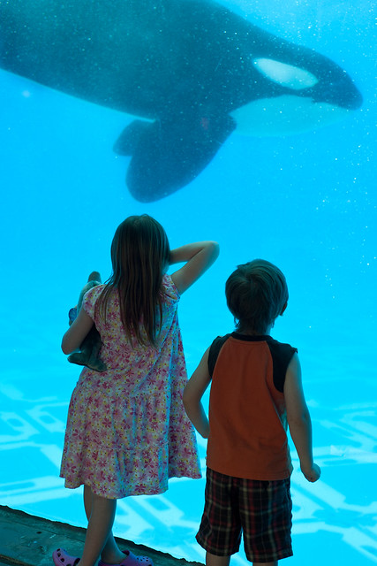 Sea World9 (1 of 1)