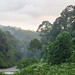 Small photo of Dipterocarp Forest at Danum Valley