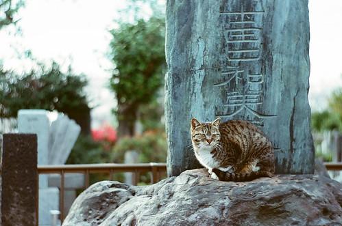 染井霊園の猫