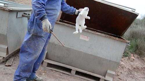 ViteSpezzate.org - Un'investigazione di Animal Equality