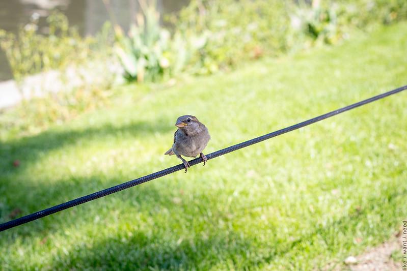 Cute Oiseau
