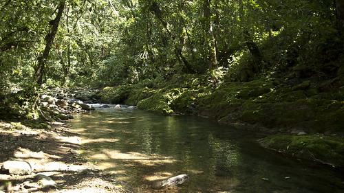 翡翠水庫食蛇龜棲地2。(圖片來源:林務局)