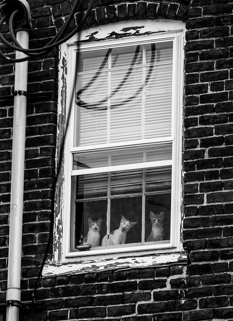 Three cats, One Window