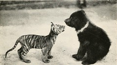"""Image from page 140 of """"The babyhood of wild beasts"""" (1917)"""