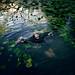 riverside by Katharina Jung