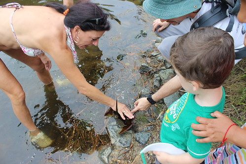 Bethany Beach - Fresh Pond - Touching Male Horseshoe Crab
