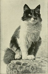 """Image from page 94 of """"The Angora cat; how to breed train and keep it;"""" (1898)"""