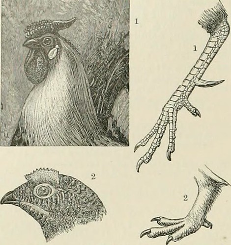 "Image from page 541 of ""The Century dictionary and cyclopedia; a work of universal reference in all departments of knowledge, with a new atlas of the world .."" (1897)"