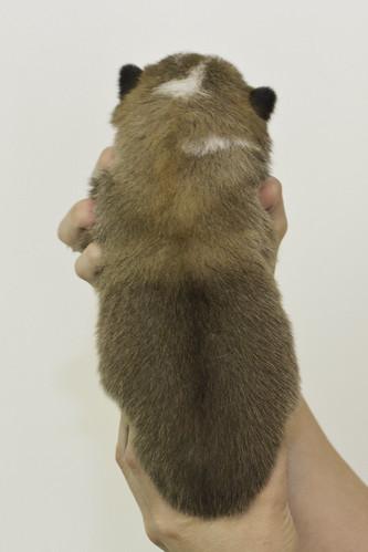 Anya-Litter1-10Days-Puppy7(Male)b