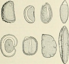 """Image from page 156 of """"The Century dictionary and cyclopedia; a work of universal reference in all departments of knowledge, with a new atlas of the world .."""" (1897)"""