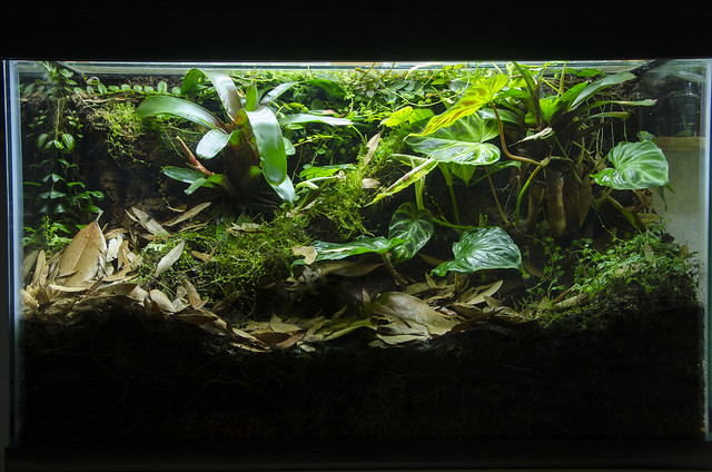 29 Gallon Phyllobates vittatus Vivarium - Update 07/30/14 ... 10 Gallon Dart Frog Vivarium
