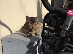 Cat sunning at Village