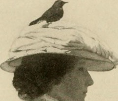"Image from page 191 of ""The book of birds, common birds of town and country and American game birds"" (1918)"