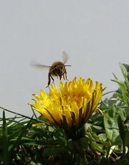 bee-vertical takeoff#94152el