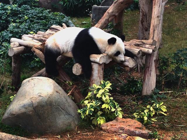It's Hard Being A Panda
