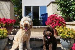 2017 Finn & Tucker #03