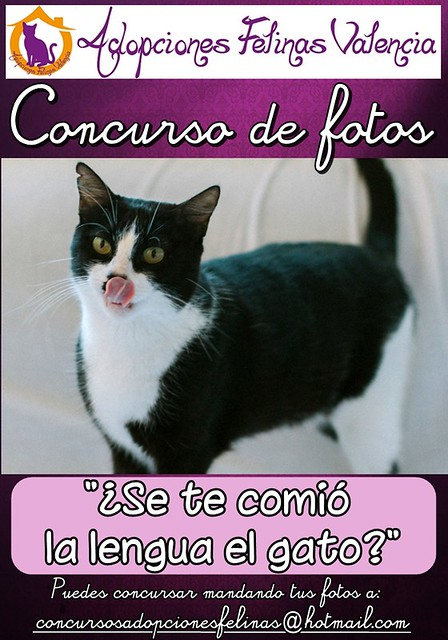 "6º Concurso fotográfico ""¿Se te comió la lengua el gato?"" Bases y fotos participantes 13979141973_b8399d389c_z"