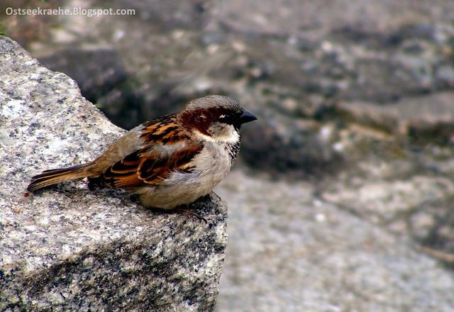 Sparrow 05