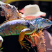 Colorful lizard by davidyuweb