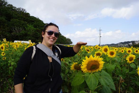 Himawari Matsuri: Short Sunflowers - Okinawa, Japan