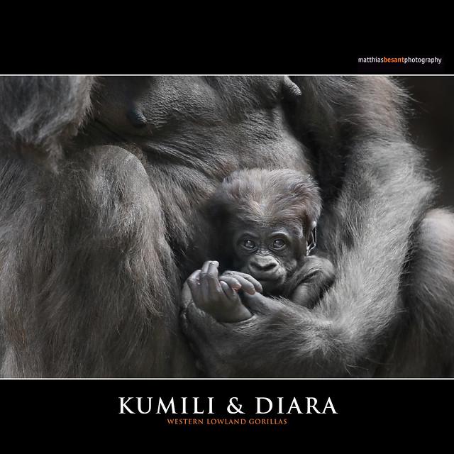 KUMILI & DIARA