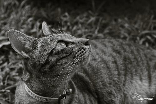 有人認養的流浪貓,圖:EYE OF GREAT7