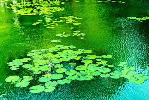 japan tokyo pond waterlily lilypad koishikawakorakuengardens d7100 bukyoku sigma1750mmf28