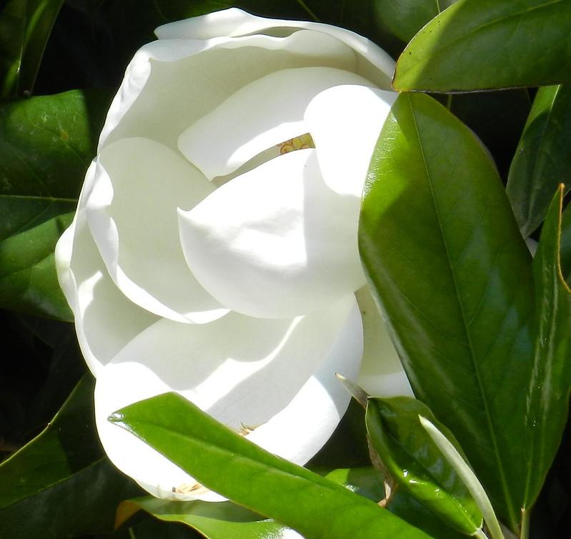 today's flowersDSCN2923
