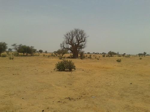 Arid drylands landscape near Niassante, Senegal