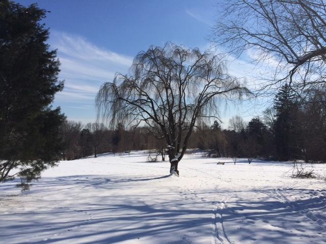Curtis Arboretum Winter