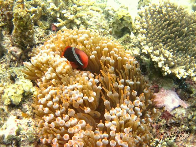 El Nemo