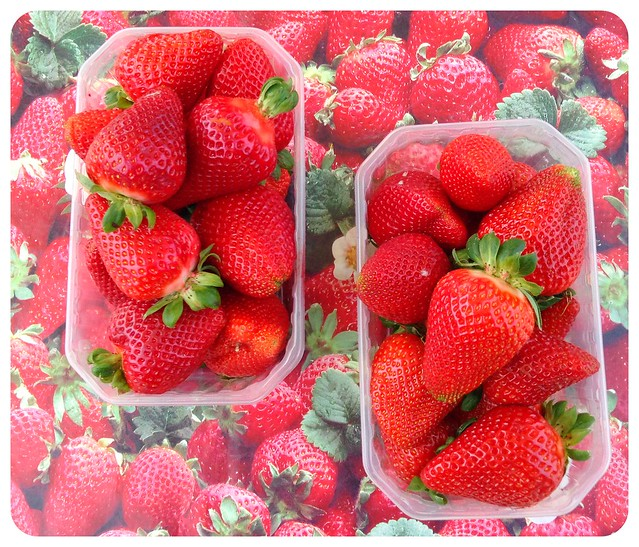 malta strawberries