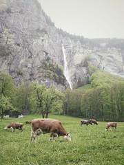 Rauterbrunnen